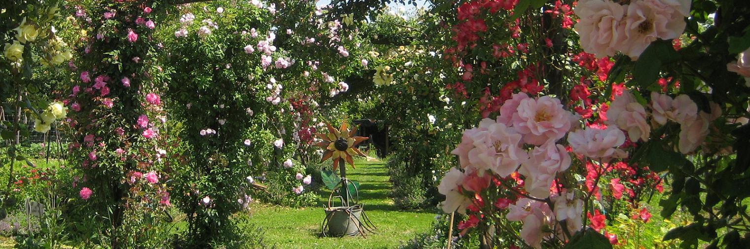 In giardino la piscina con vista sui vigneti - Giardino con rose ...